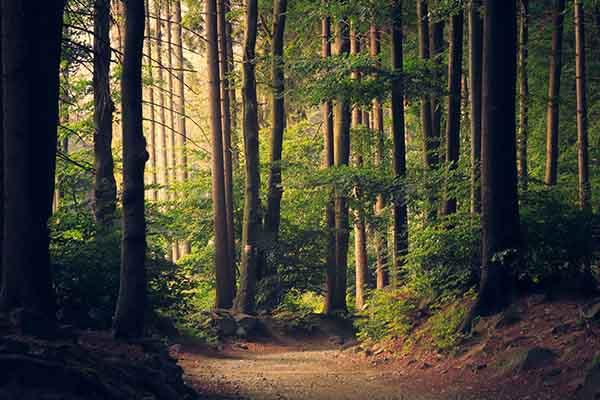 Winterthurer-Wald